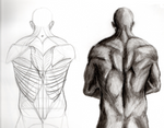 Study of the back with muscle anatomy by SpookyBoiArt