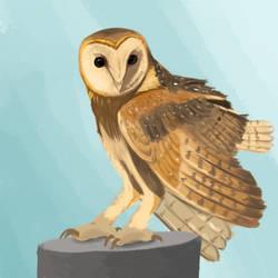 Owl by selftaughtartist1