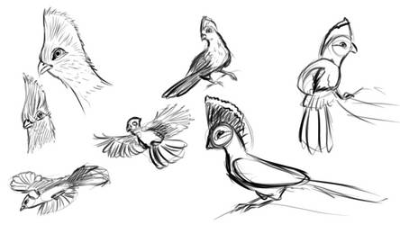 bird doodles by selftaughtartist1