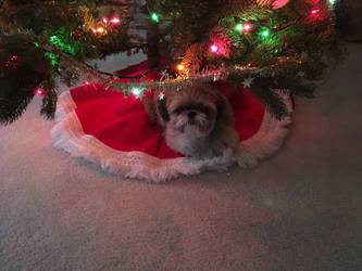 My Christmas Present by FantasyFun98