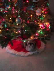 Christmas Coco by FantasyFun98