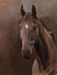 Horse Portrait Painting by MeWannaLearn