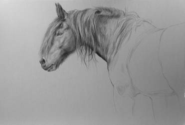 Drawing Horse by MeWannaLearn