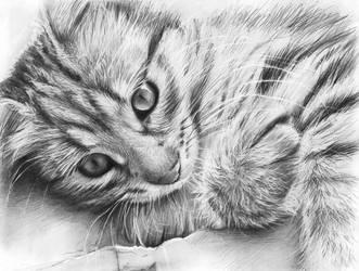 Kitteh by Olechka01