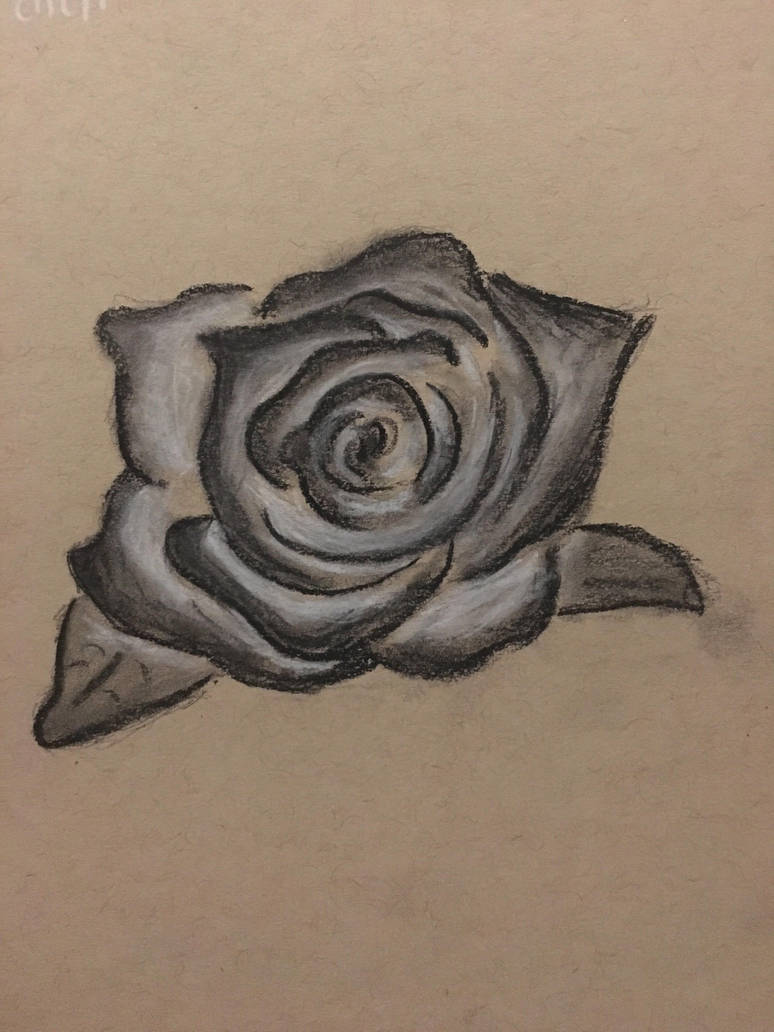 Rose by hollystopplz