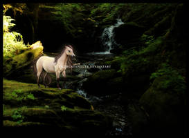 Enchanted Forest by katiecatapillar
