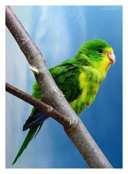 feel free like a bird by moex