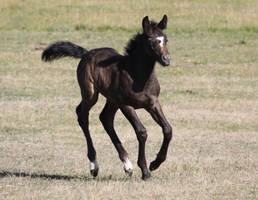 Seven Foal Stock by blaisedrew62