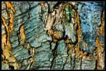 Closeup of Tree Bark by delobbo