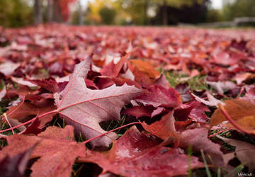 Red leaf carpet by Merkosh