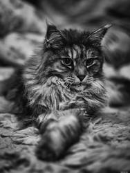 Princess by Merkosh