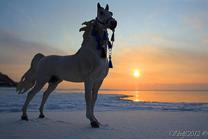 Ice Sunrise by Shelfi