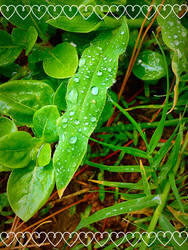 Dewdrops on Leaves by Lzzam77