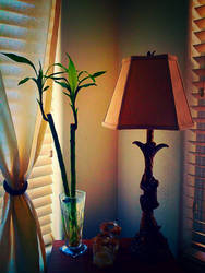 Bamboo and Lamp by Lzzam77