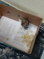 Come For The Baby Owl, Stay For The Baby Owl by Clockchat
