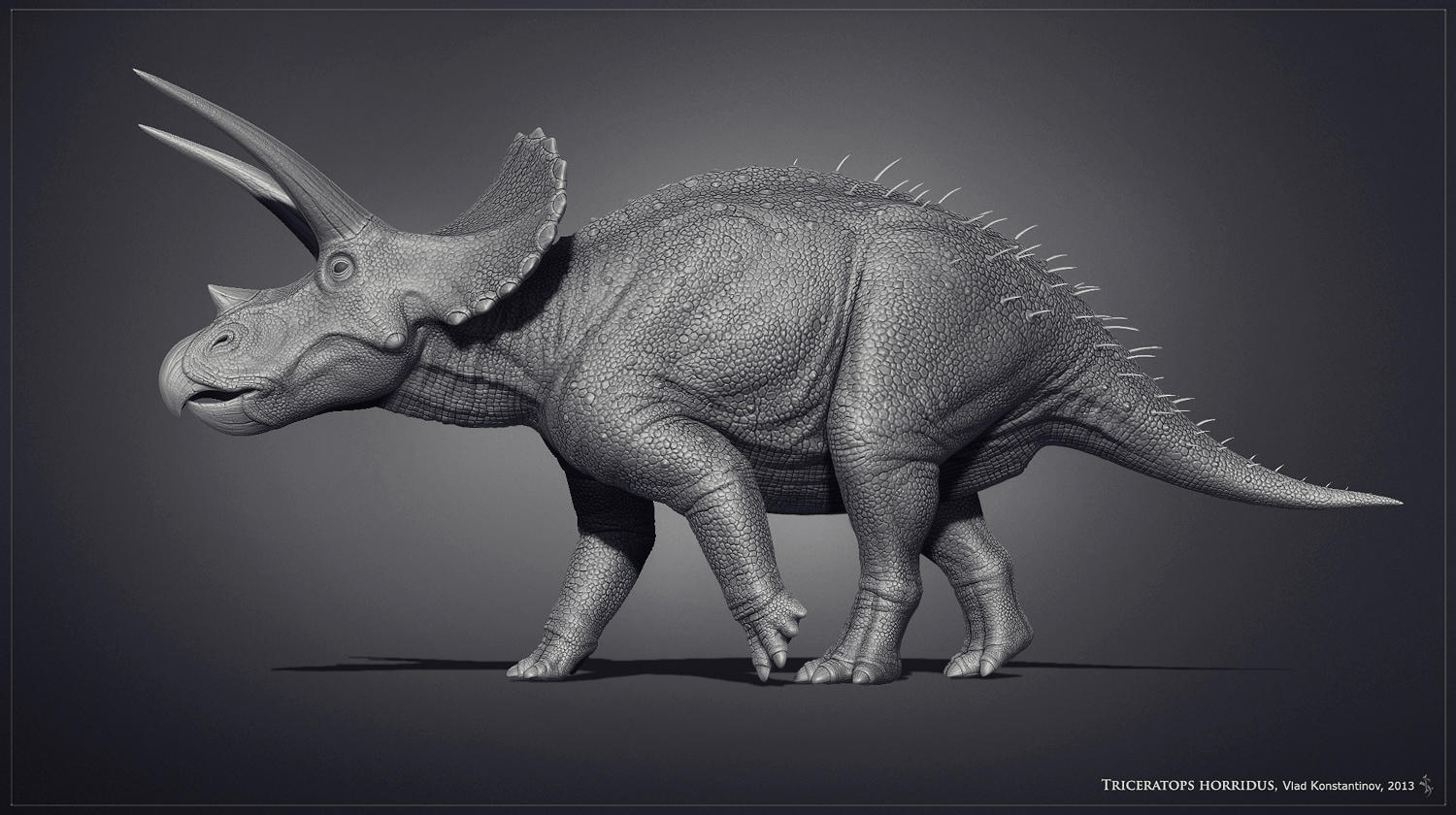 Museum Triceratops by Swordlord3d