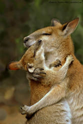 Mother and Baby Wallaby Hug by Creative-Addict