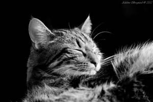Asleep by BazarDeLaNature