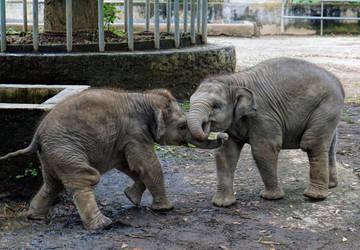 Elephants by cemacStock