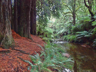 Redwood Forest by cemacStock