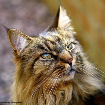The Cat as a Philosopher - Philosopher King by Okavanga