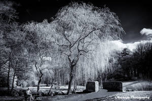 Some Infrared Reflections 1 by Okavanga