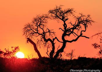 Sunrise, Rhino Ridge by Okavanga
