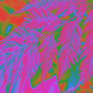 Leaf - EquiPalette250 by Okavanga