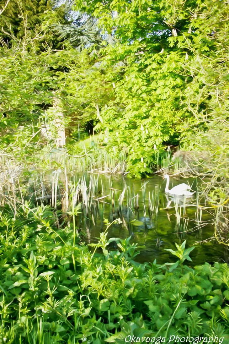 Dream Smooth - River Stour Swan by Okavanga