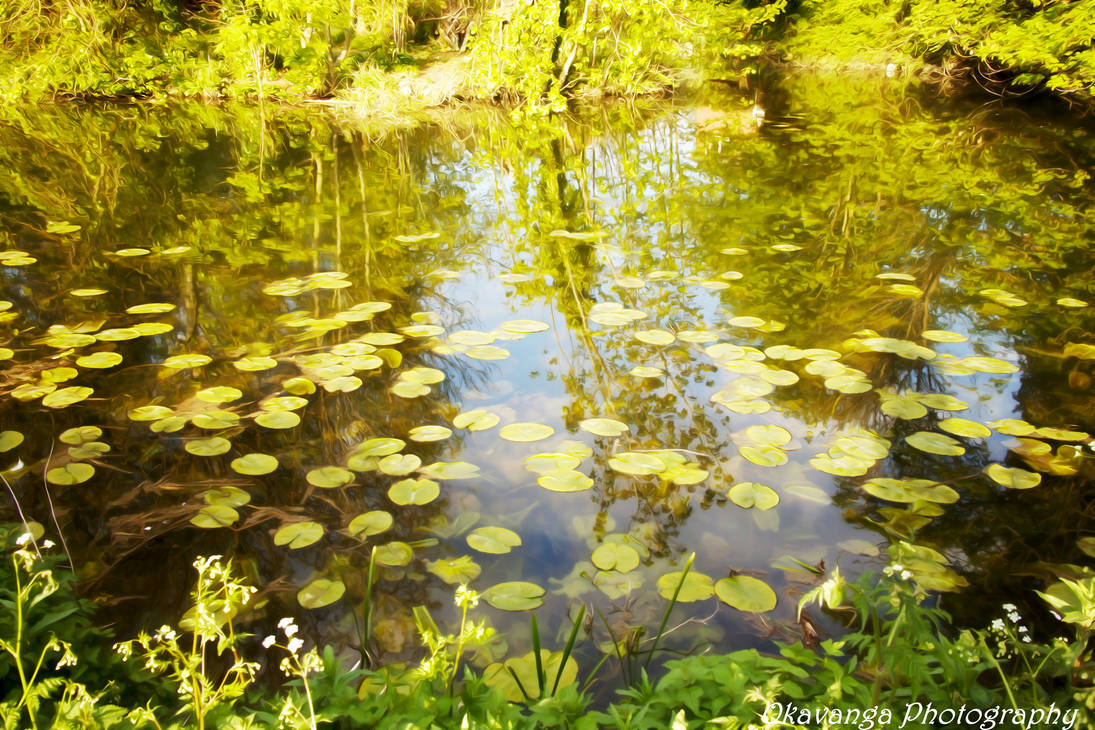 Dream Smooth - River Stour Lily Pond by Okavanga