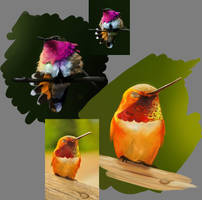 Humming Bird Study by Royal-Fox