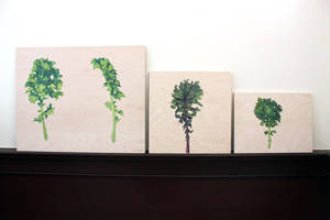 Garden 02: Kale by taho