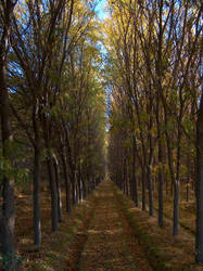 Path Less Taken by kahlan732000