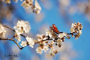 Butterfly by KatrinaSwinnley