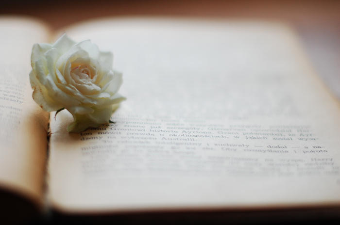 White Rose by KatrinaSwinnley