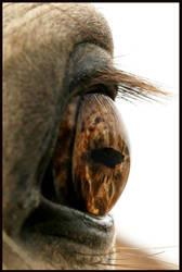 i eye by honalee