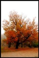 Silence of autumn. by Bunnis