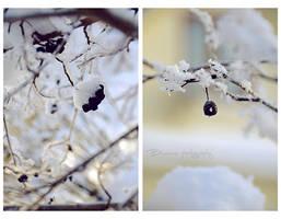 Frozen summer pieces. by Bunnis