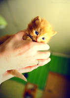 Tiny size - big life. by Bunnis