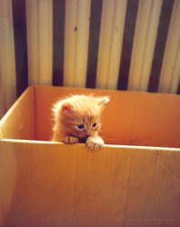 Surprise from a box. by Bunnis