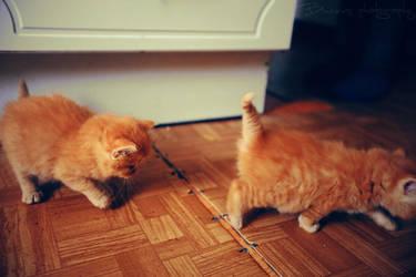 Follow the peachy kitten. by Bunnis