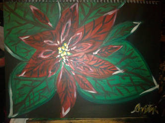 Poinsettia by ChristineK6277