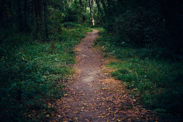 Paths-4 by PSD-stocks999