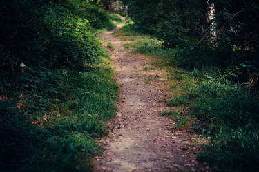 Paths-6 by PSD-stocks999