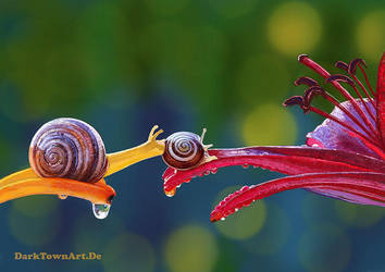 Another Painted Study Of Two Snails With Video by ZombieSandwich