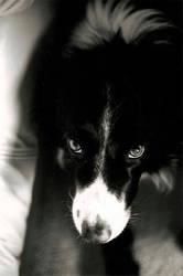 Soulful Eyes by snowpandazero
