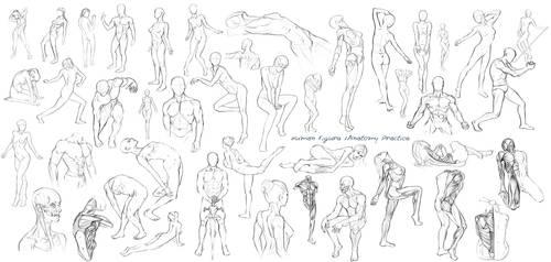 Figure / Anatomy drawings - week completed by Nixri