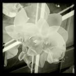 Flowering Cross by HorstSchmier