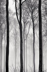 A Strip of Trees 02 by HorstSchmier