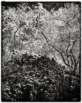 Trees and Stones 15 by HorstSchmier